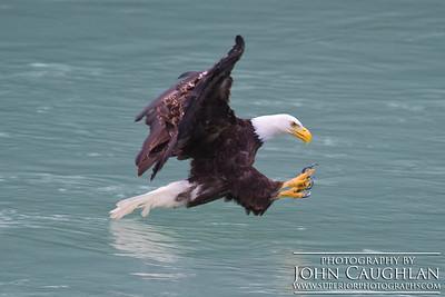 Eagle2k
