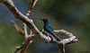 humming-bird (1)