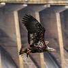 Conowingo Eagles