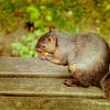 Manhattan City Hall Squirrel