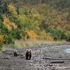 Naknek Lake | Katmai National Park | Alaska
