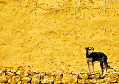 Dog at Aswan Docks