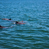 Dolphins-025