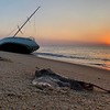 A Clearnose Skate and Abandon Sailboat on Beach at Sunrise 7/14/19