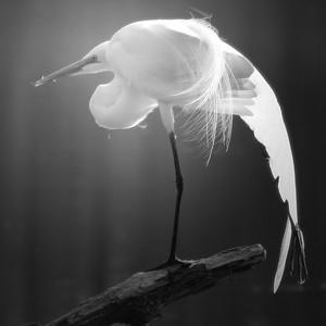 Egret Pose