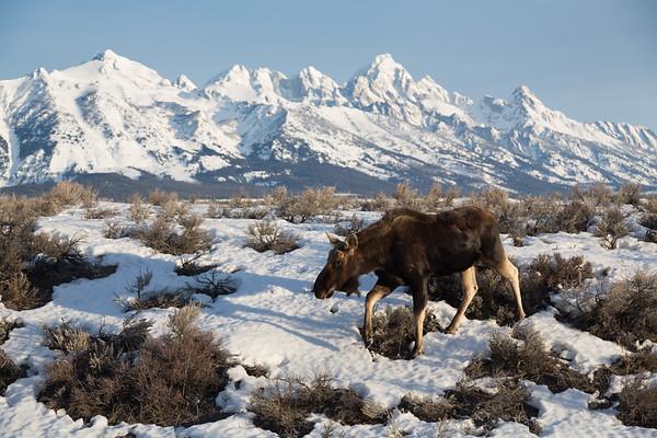 Grand Teton National Park | Wyoming