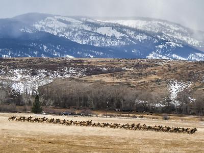 February Elk
