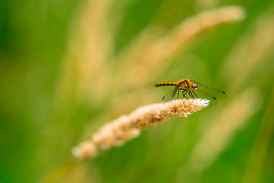 Dragonfly ready for take off