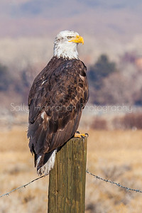Eagle on Post