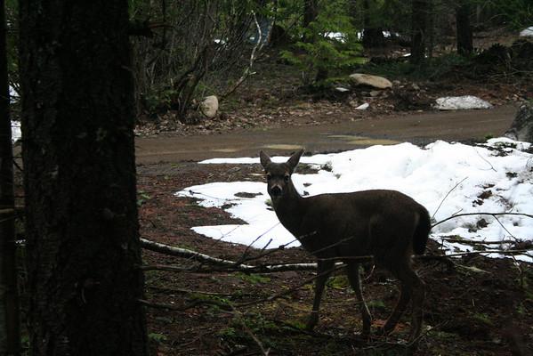 deer IMG_3070