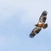 Harlan Hawk