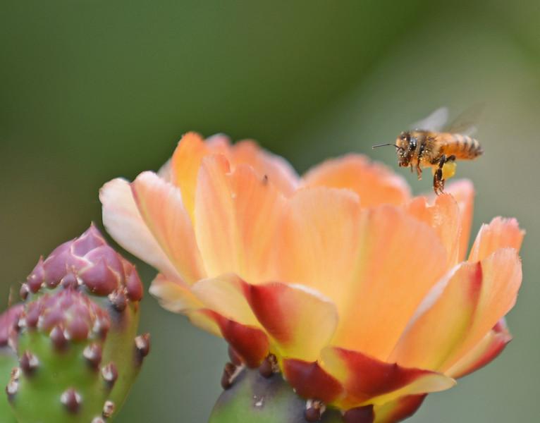 Pollination.