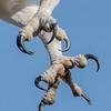Osprey Talons 4/11/17