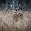 Handsome Buck