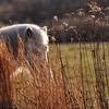 shy girl...