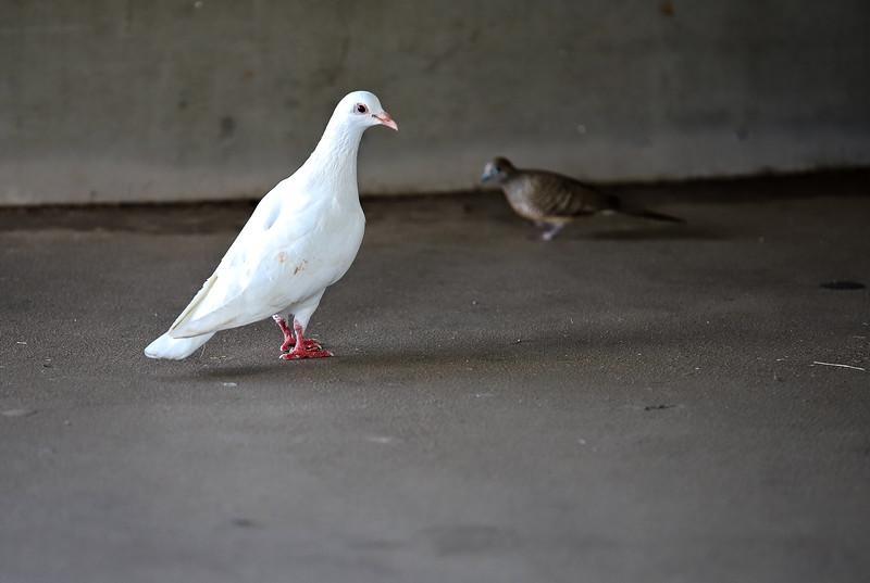 PearlHarborBird-002