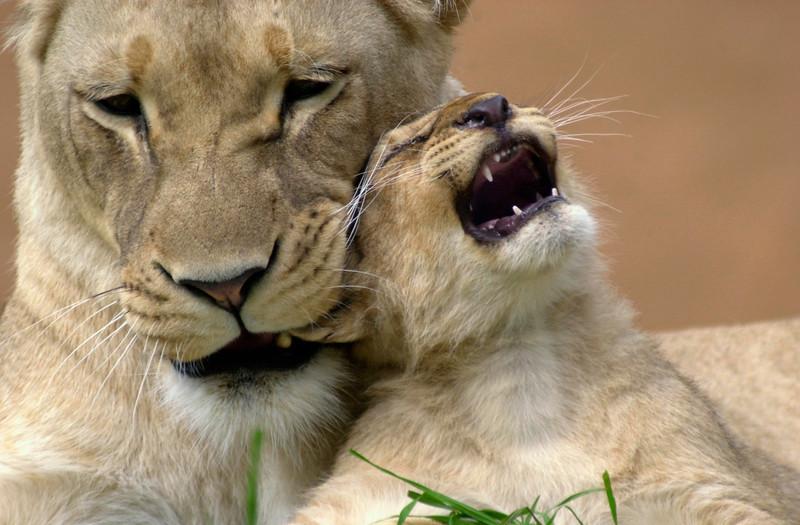 Motherly Discipline