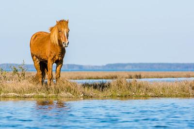 Wild Horse Moment
