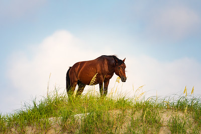 Stallion on the Dune