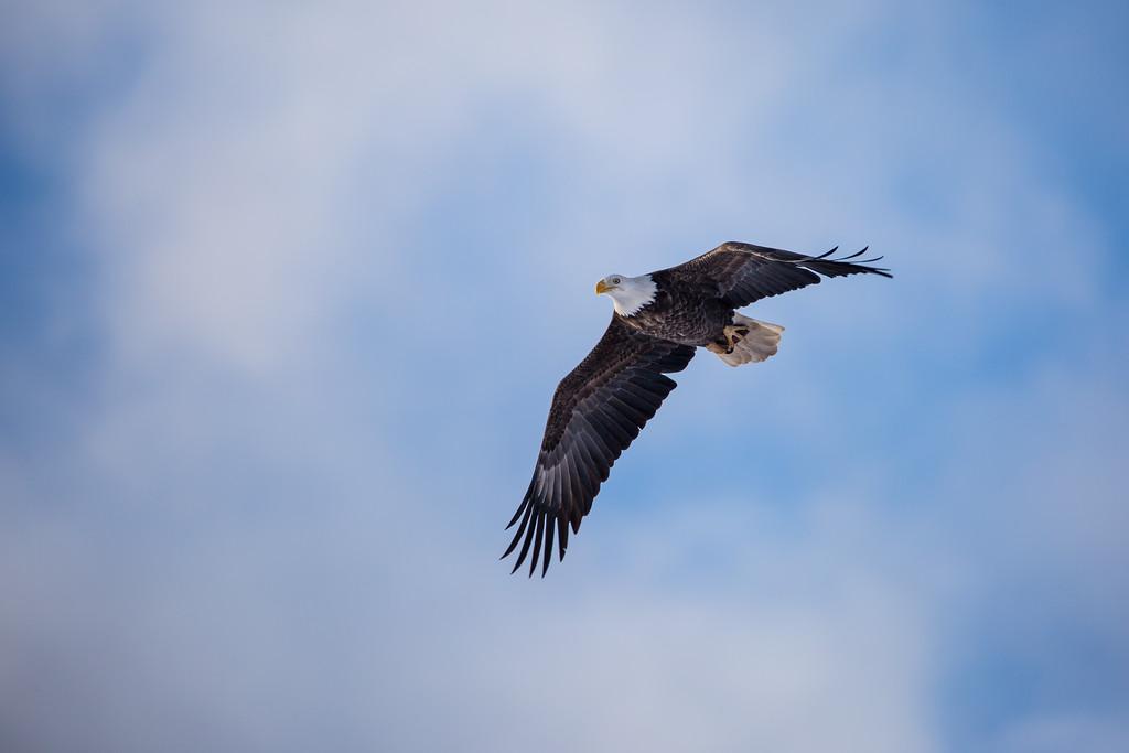 Year End Eagle