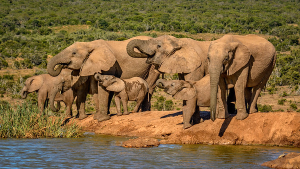 Addo Elephant National Park, Port Elizabeth