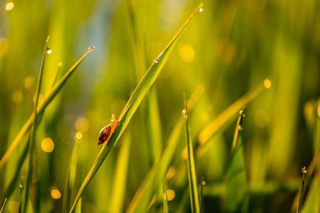 Morning Snail