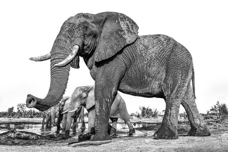 Botswana-00255-Print.jpg