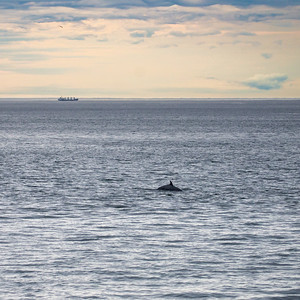 A whale feeding at Cap de Bon Désir early in the morning.