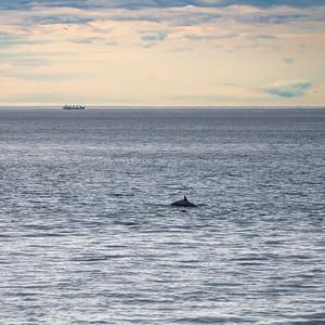 A whale feeding at Cap de Bon Désir early in the morning.