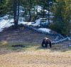 "Aug 25 - ""G"" is for Grizzly in Yellowstone<br /> <br /> I was fortunate to see this large Grizzly in the spring. The image doesn't really do him justice - he was huge!  You can see where he was digging up the soil to find grubs.  He went back into the woods shortly after I was able to get this shot."