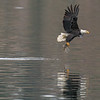 Reflection of Magestic Eagle