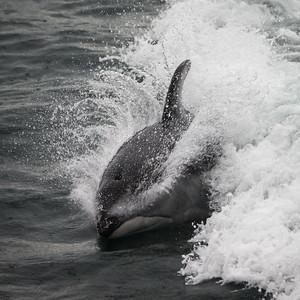 Surfing, Pacific Northwest Style