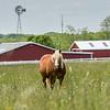 A Horse in a Field 5/23/16