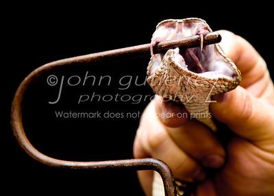 rattlesnake-03