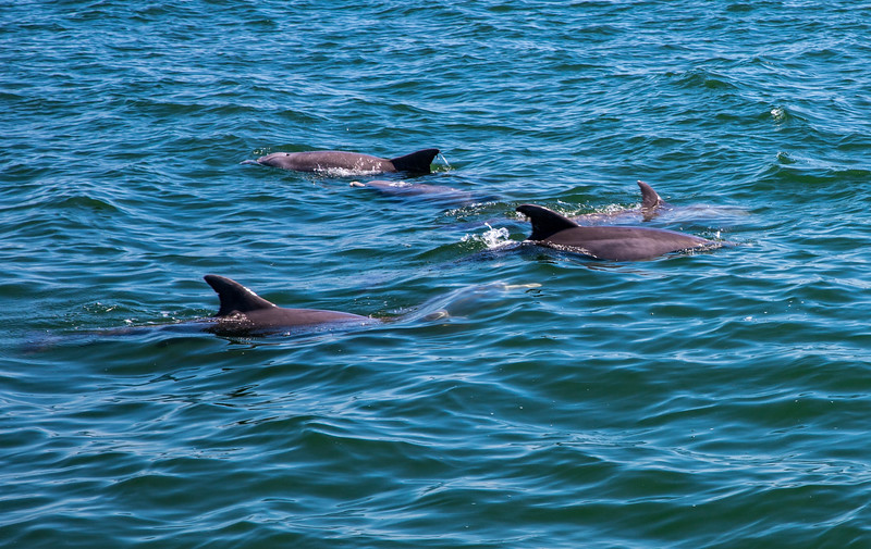 Dolphins-026