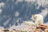 Mountain Goats. Utah