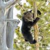 My First Tree Climb