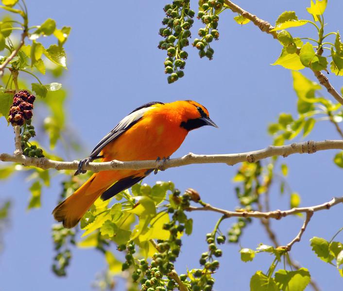 Orange You Glad You Met Me?