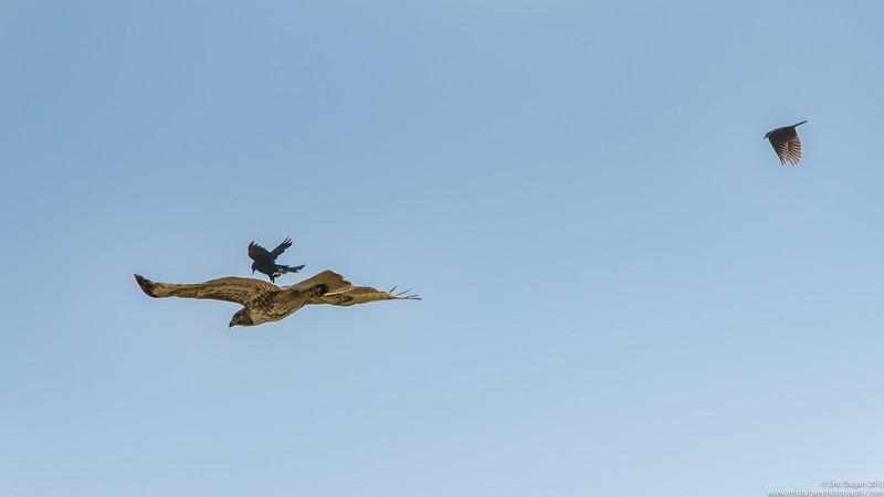 """""""Let's Get That Hawk"""""""