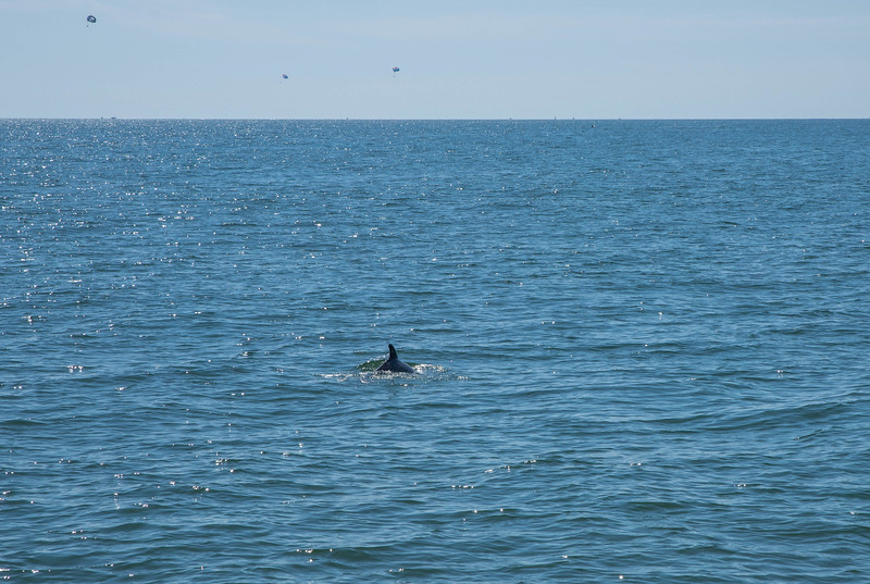 Dolphins-002
