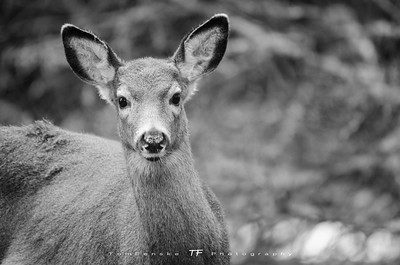 Curious Young Doe