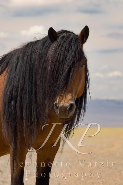 Mongolian Stallion, Bay, Mane