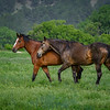 Two horses at Fort Niobrara National Wildlife Refuge near Valentine, Nebraska