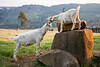 Tender affection, dairy goats in the Midlands, KwaZulu-Natal
