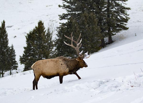 Yellowstone National Park | Wyoming