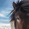 Icelandic horse closeup near Vik, Iceland