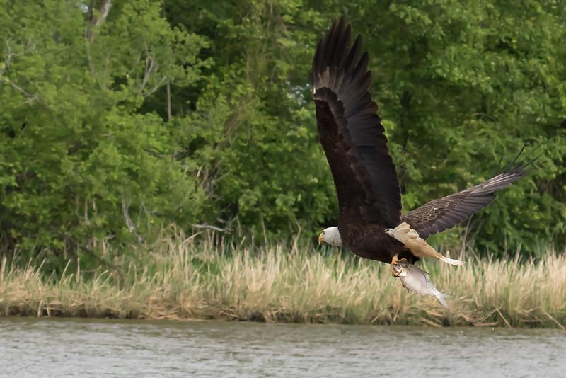 James River Takeaway