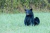 Bear #4 sitting