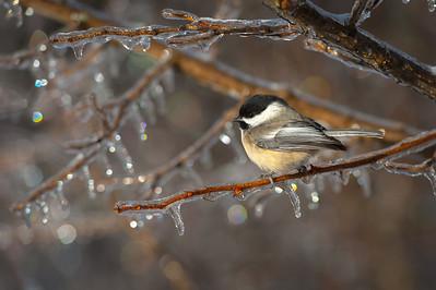 """""""Ice Storm 2013"""""""