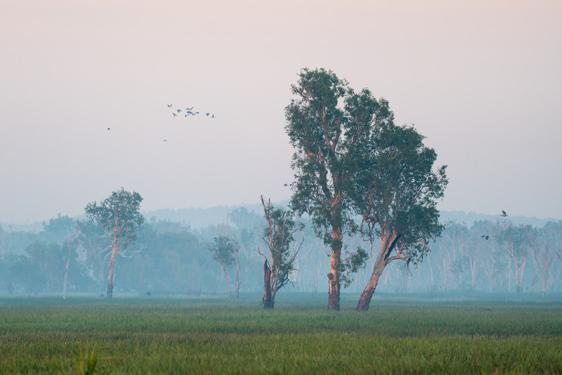 Birds and a pastel sunrise, Kakadu, Australia.